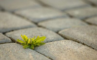 How to Kill Weeds Between Pavers – What Should I Put Between Pavers?